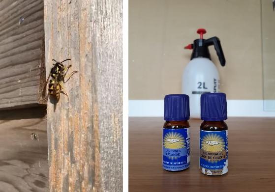 Wespen en verjagers